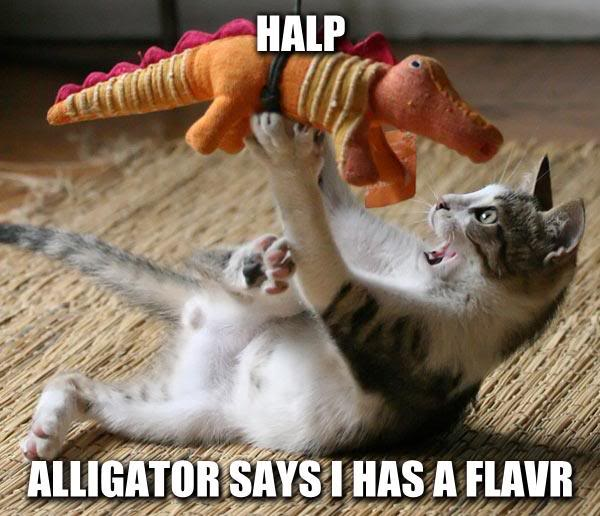 upload:Descant/aligator_cat.jpg