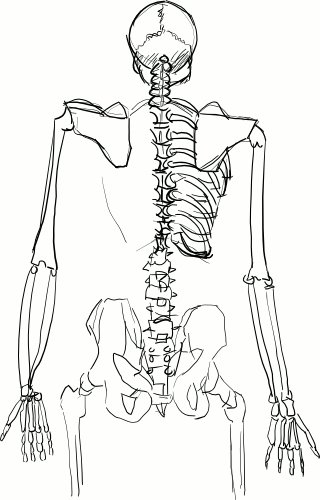 upload:UpiRajzBlog/systems_skeleton_back_incomplete.png